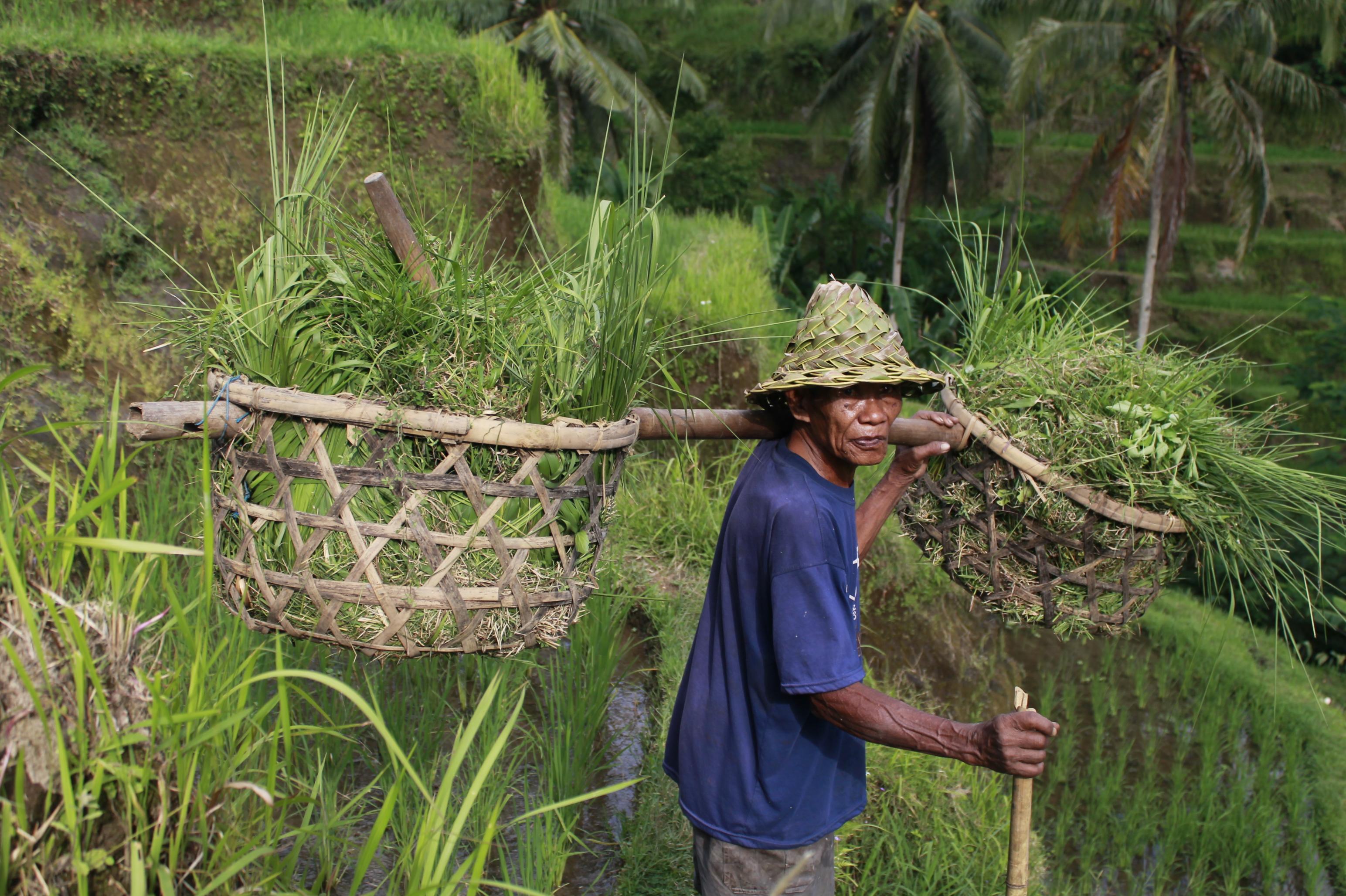 Riceterrace_Bali
